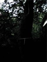 新羅神社の御神木。