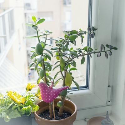 plants kabuwake1