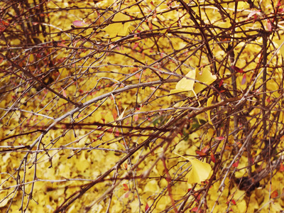 yellow leaves blog