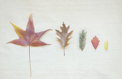 autumn traces blog