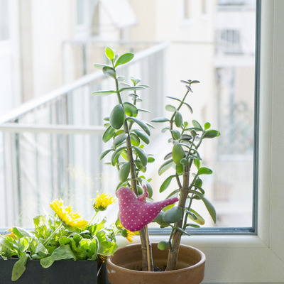 plants kabuwake2