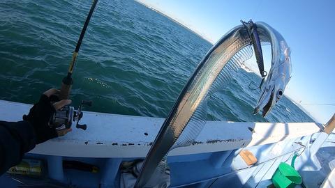 絡んだ太刀魚