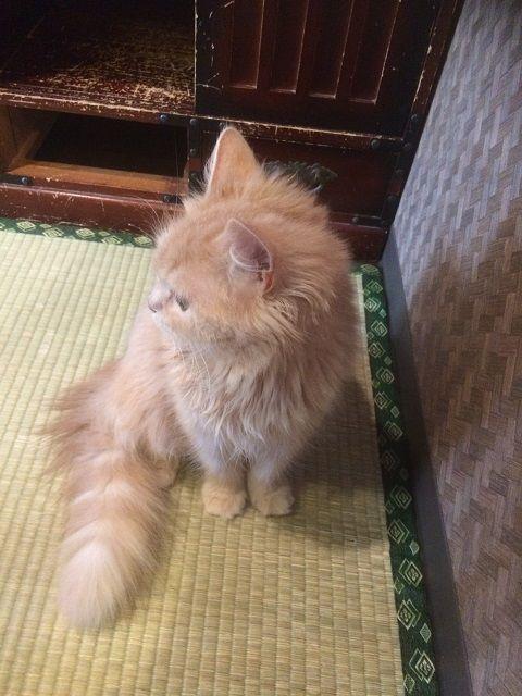cat_cafe_170605_4