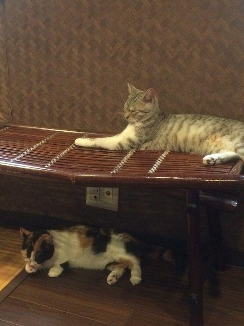 cat_cafe_170605_5