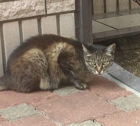 straycat_170908_3