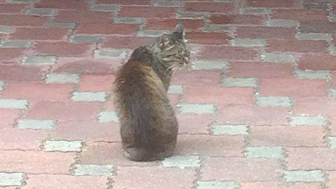 straycat_170908_1