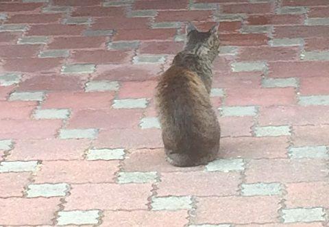 straycat_170908_2