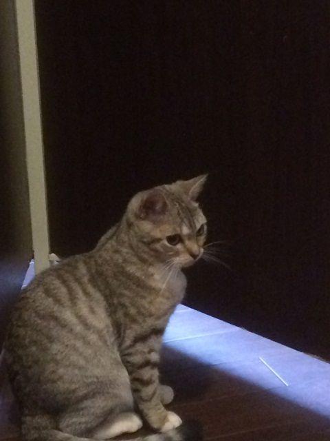 cat_cafe_170605_2