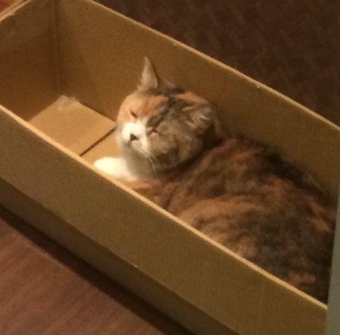 cat_cafe_170605_1