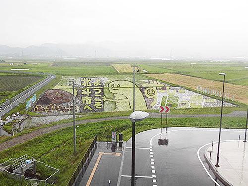 6月15日に来て以来となるずーしーほっきー田んぼアートを観に来ました。