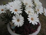 ゆうなのお花