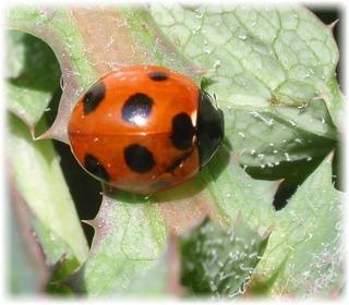 【啓蟄】とは、虫が冬眠から目覚め活動を始める頃という意味