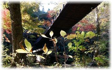 下から見上げた汐見滝吊り橋