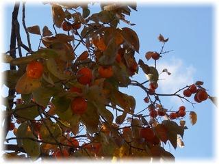 これは「甘柿」だな