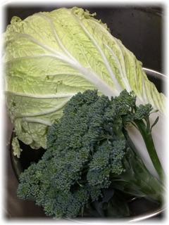 ドーーーン!と置かれた白菜とブロッコリー