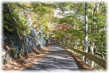 小滝沢キャンプ場先は「紅葉並木」