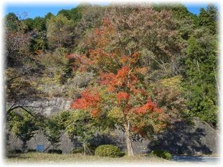 山の紅葉もあと少しだ