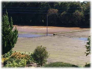 畑は小々波がたつほど水が溜まっている💧