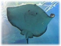 大好きなサメやエイが沢山いる水族館へ