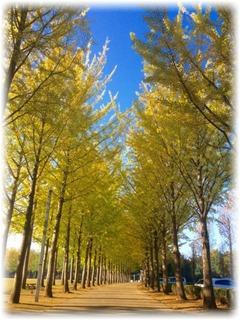つくば秋の彩り(科学万博記念公園)