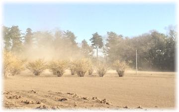 家の南側に面した畑
