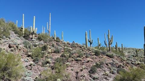 saguaro-1257015_960_720