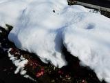 やっと晴れたがあたりは積雪のまま…。