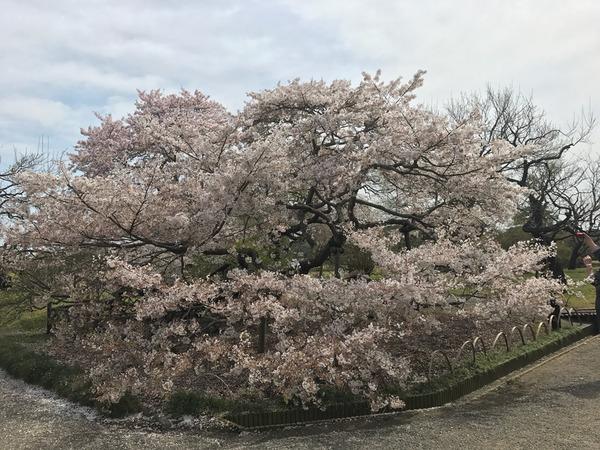 2017-04-16-13-19-34