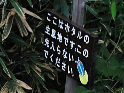 ホタルと仲よくなったのん!札幌「西岡公園」で蛍を見てきました!