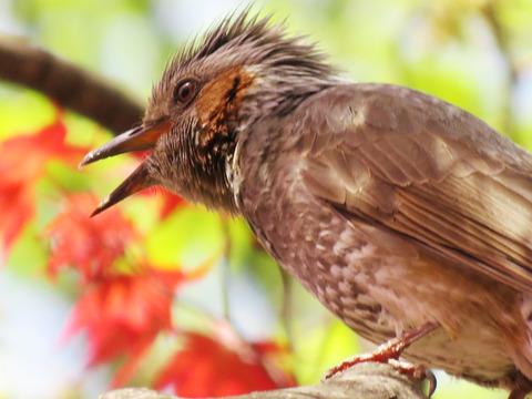 札幌「中島公園」の野鳥たちに癒されまくる