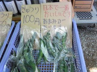 日本で一番おいしいキュウリ