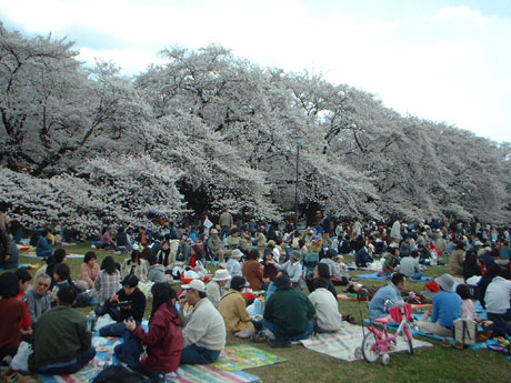 花見at小金井公園