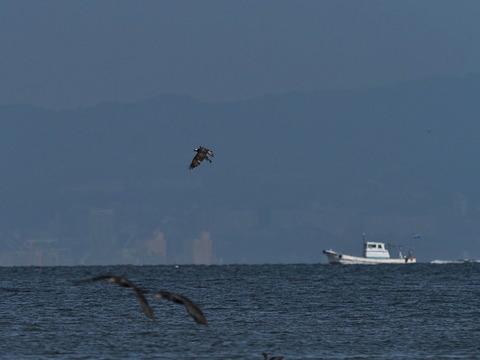 ⑦うっすら対岸の神戸が見えます