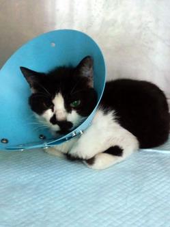 120517負傷猫保護HI3H10000001