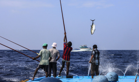 モルジヴのカツオ一本釣り漁業 (c)MSC海洋管理協議会