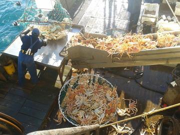 Santiago_Bianchi_King_crab_fishery
