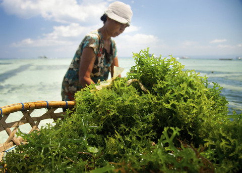 seaweed05