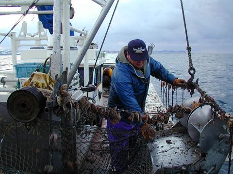 北海道のホタテガイ漁業
