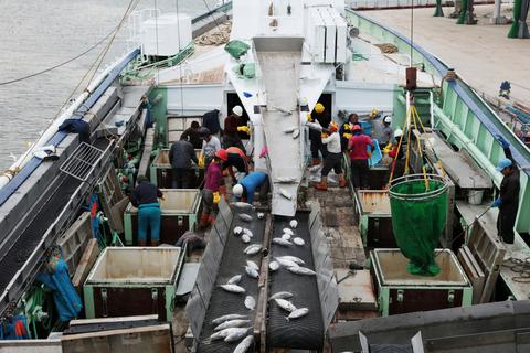塩釜港での明豊漁業のカツオ水揚げ(MSC提供)