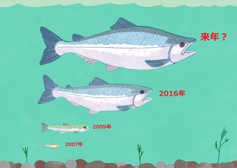 RS98_salmon_01-lpr(2)
