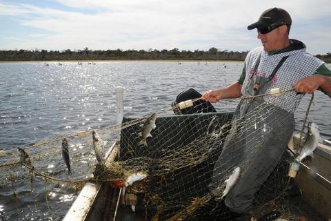 西オーストラリアのボラ漁業