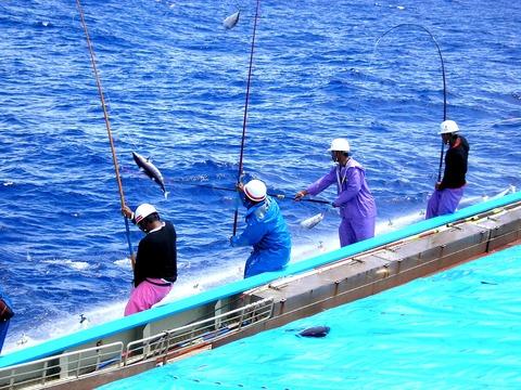 明豊漁業の一本釣り