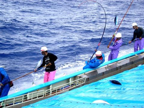 明豊漁業の一本釣り写真(明豊漁業株式会社提供)