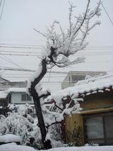 0107初雪