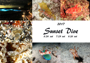 Sunset dive1