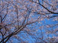 breeze20100403_002