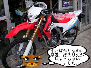 IMGP7718.JPG