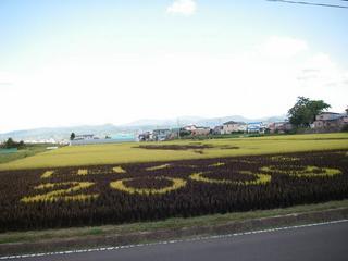 田んぼアート1