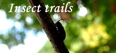Insect trails