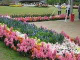 花と花壇1